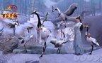 五毒孔雀跟宠攻略