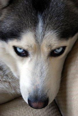 白眼狼 - 汉语词汇 编辑词条 修改义项名