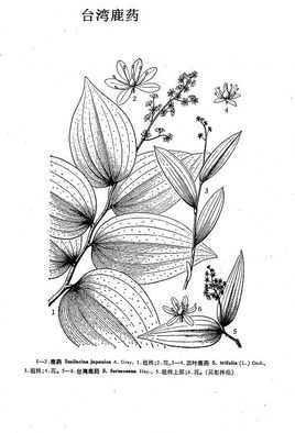 手绘麋鹿头图片素描