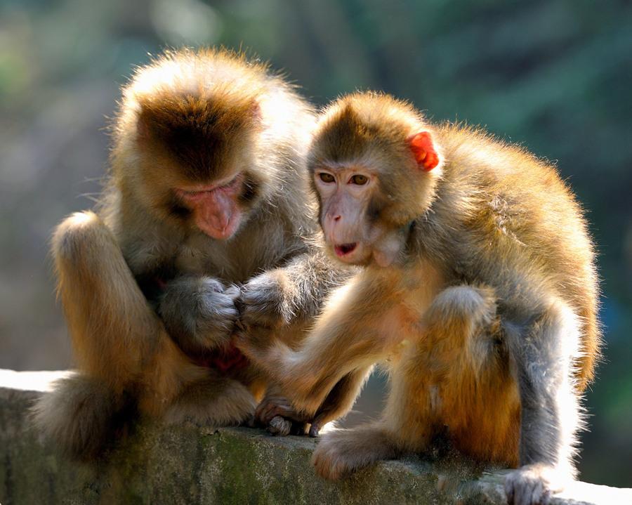 动物猴子绘画大全