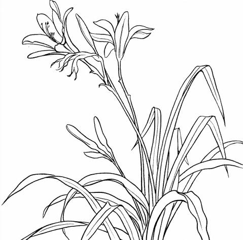 水仙花怎么画简笔画