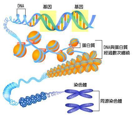 异染色质  免费编辑   添加义项名