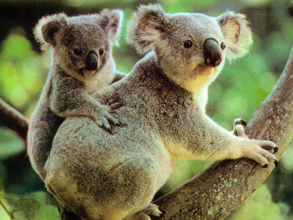 澳大利亚_360百科