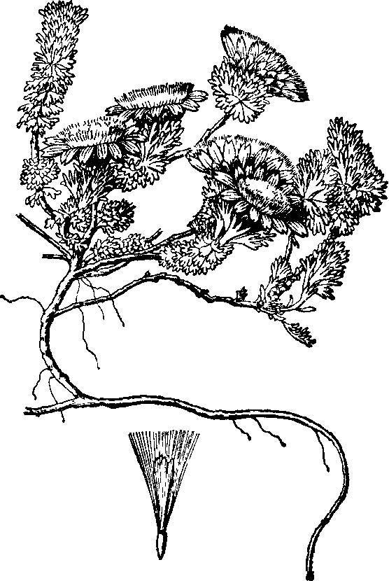 西藏彩带矢量图